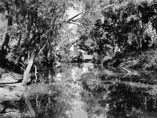 Barcoo River near Blackall 1938