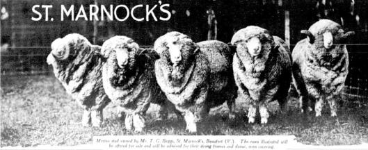 St Marnock's rams 1935
