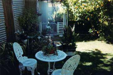 Hovell Street back garden with lemon tree